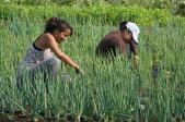 mujeres-sembrando-comuna-carlos-escarrá