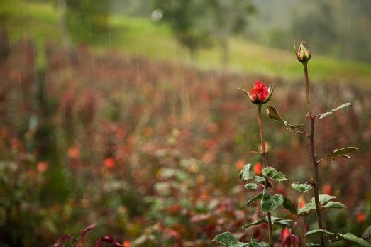 Rosales-de-la-comuna-en-pleno-aguacero-Macho-Capaz