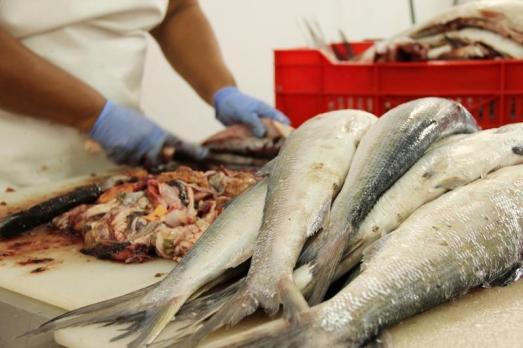 Tripas-y-pescados-detalle-Islamar