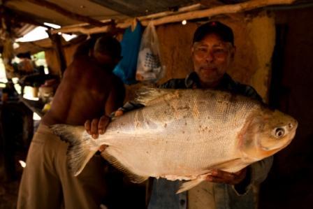 Panapana-pez