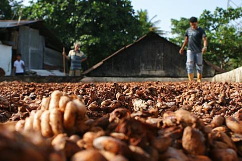 Cacao séchant au soleil, commune agricole de Cacigal