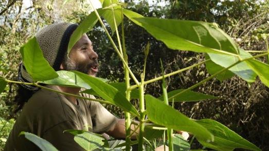 Julio Mota, le lutin des champs de café