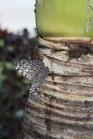 El efecto mariposa de la permacultura 2